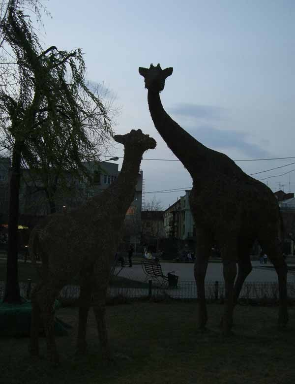 Жирафы тоже!